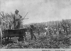 Asugar slaves
