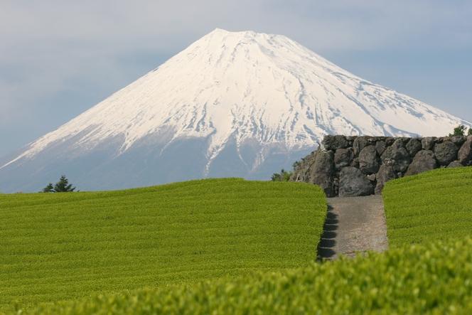 Le thé du mont Fuji (Japon)