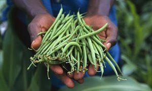 beans10c