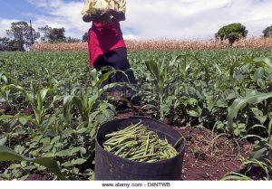 march-14-2013-nairobi-nairobi-kenya-march-14-2013-nairobi-kenya-a-d4ntwb
